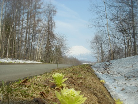 羊締 春の道
